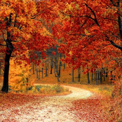 5 Amazing Things About Fall (and One Sad Thing)