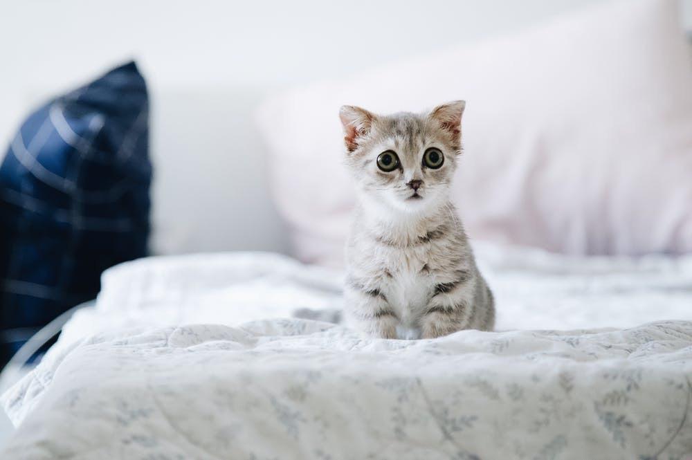 The Great Comforter Catastrophe