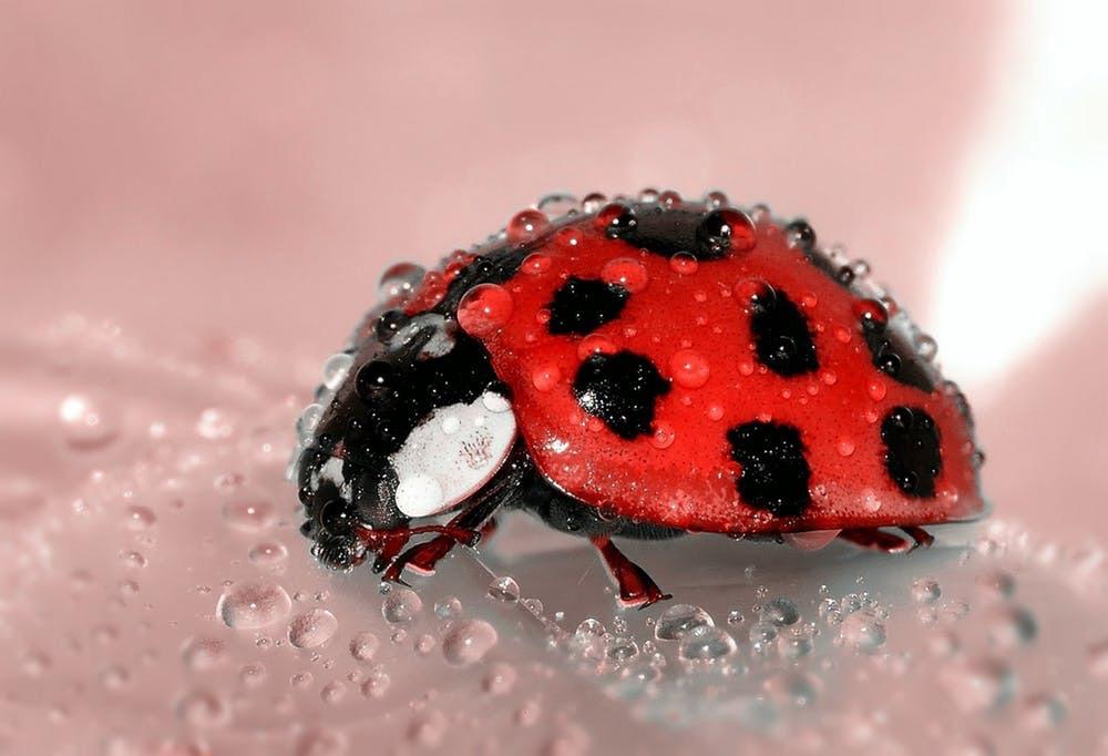 Lady Bug, Lady Bug…. Fly Away Home Already!!