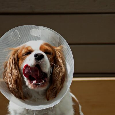 """""""Cone of Shame?"""" Not so fast."""