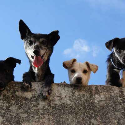 Learning Good Manners… at the Dog Park?