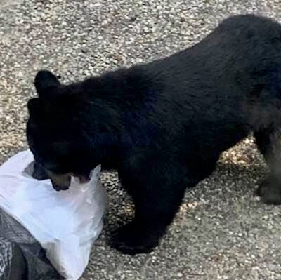 Mondays and Garbage and Bears… Oh My!